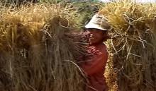 2009年上映『ラオス 農に生きる7人』