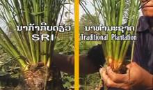 2009年上映『多収量コメ栽培に挑むラオス農民』