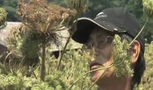 2010年上映『種を採る人』