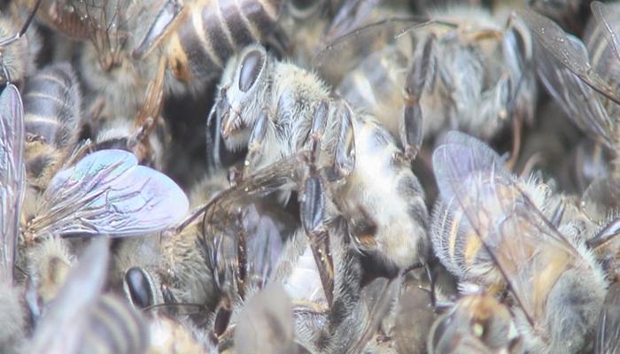 2011年上映『ミツバチからのメッセージ』