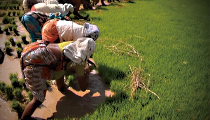 有機農業が拓く地平 ― インド ティンバクトゥの挑戦