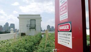 ブルックリンの屋上農園