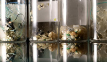 海中から採種された多彩なマイクロプラスチック